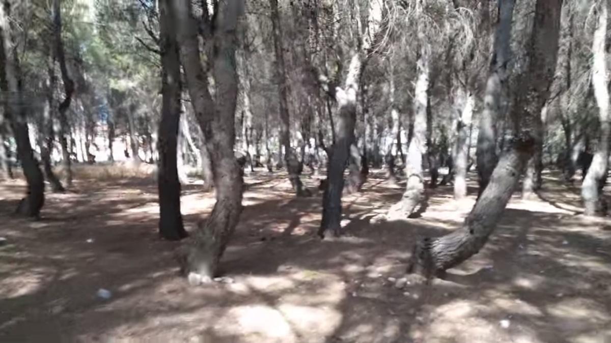 Bosque misterioso torceduras por Joan Carles lópez
