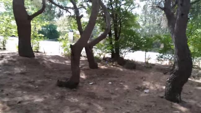 Giros imposibles en el bosque misterioso por Joan Carles López