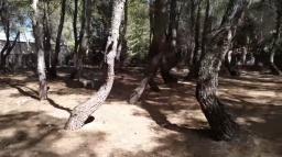 Torceduras enfrontadas en el bosque misterioso por Joan Carles lópez