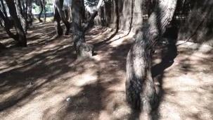 Alteraciones geobiológicas en el bosque encantado por Joan Carles lópez